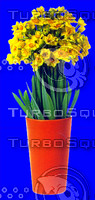 plant_016.jpg