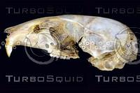 lateral-skull004.jpg