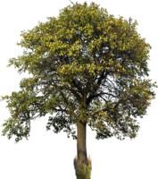 tree46