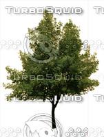 tree#6