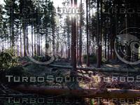 forest.rar