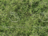 Bambus2.jpg