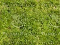 Foliage 12 - Tileable