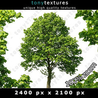 Summer Cutout Tree 16 High Resolution