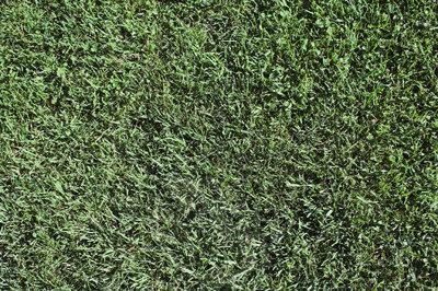 GRASS_A3.jpg