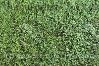 GRASS_05