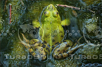 frog_3.JPG
