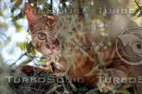 Kitty in Tree.jpg