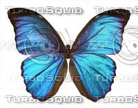 Butterfly Morpho Elena Eusebes.psd