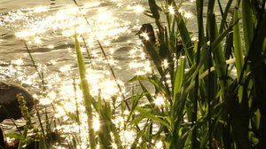 Pond Sparkle Part One