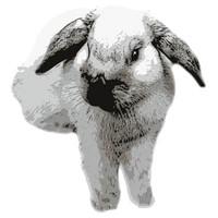 SPV_Bunny001