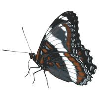 SPV_Butterfly002