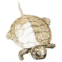 SPV_Turtle001