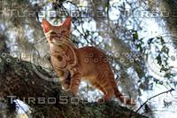 Tabby Standing in Tree.jpg