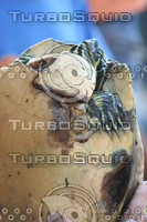 Turtle with cracked shell.jpg