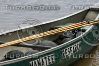 Turtles in Manatee Research Boat.jpg