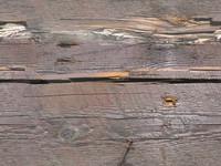 Wood 106 - Tileable
