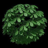 chestnut_leaf.zip