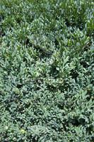 grass foliage