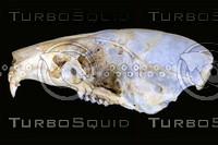 lateral-skull002.jpg