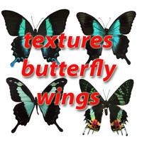 tropical butterflies.rar