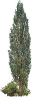 tree59
