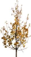tree71