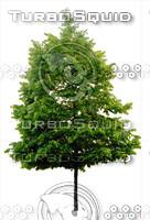 tree#8
