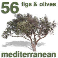 Cut Out - 56 Fig Trees & Olive Trees