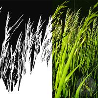 Tex_001_Grass