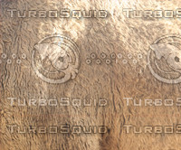 camel skin texture