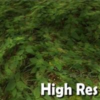 Forest grass texture