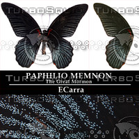 Butterfly Papilio Memnon