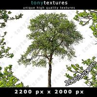 Summer Tree 13 High Resolution