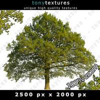 Summer Tree 17 High Resolution