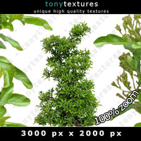 Cirrus Plant Texture - High Resolution