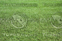 GRASS_04