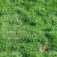Ground_grass_14.zip