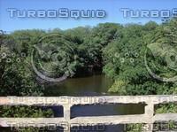 Mangrove Creek.JPG