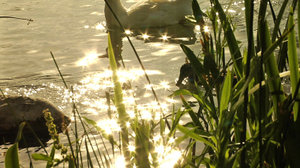 Pond Sparkle Part Two