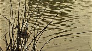 Pond Sparkle Part Three