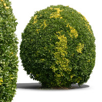 bush21