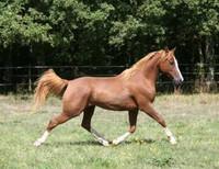 gallop.wav