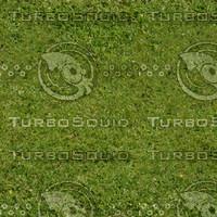 Grass #11