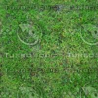 Grass texture # 4