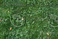 grassleaf.jpg