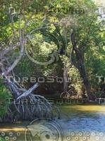 mangrove Creek (2).JPG