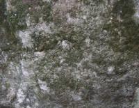 taihu stone 13