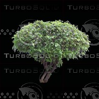 tree-02-06