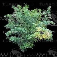 tree-02-08